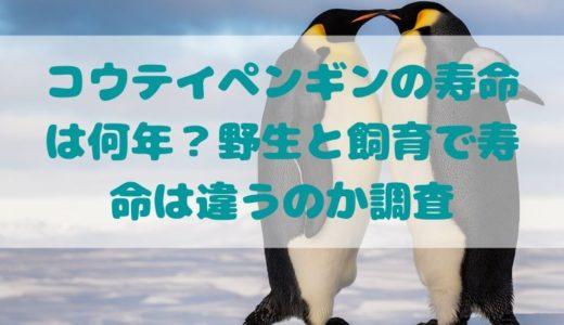 コウテイペンギンの寿命は何年?野生と飼育で寿命は違うのか調査