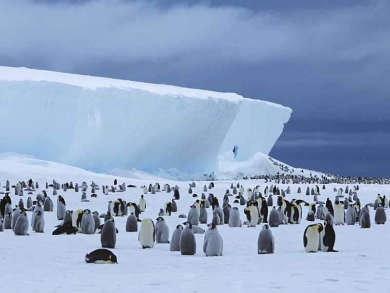 コウテイペンギン(エンペラーペンギン)の生態系