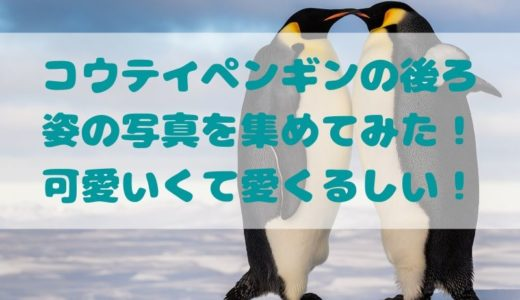 コウテイペンギンの後ろ姿の写真を集めてみた!可愛いくて愛くるしい!