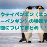 コウテイペンギン(エンペラーペンギン)の特徴や生態についてまとめ!