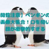 【閲覧注意】ペンギンの怖い画像大集合!口を開いた顔が衝撃的すぎる