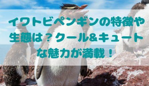 イワトビペンギンの特徴や生態は?クール&キュートな魅力が満載!